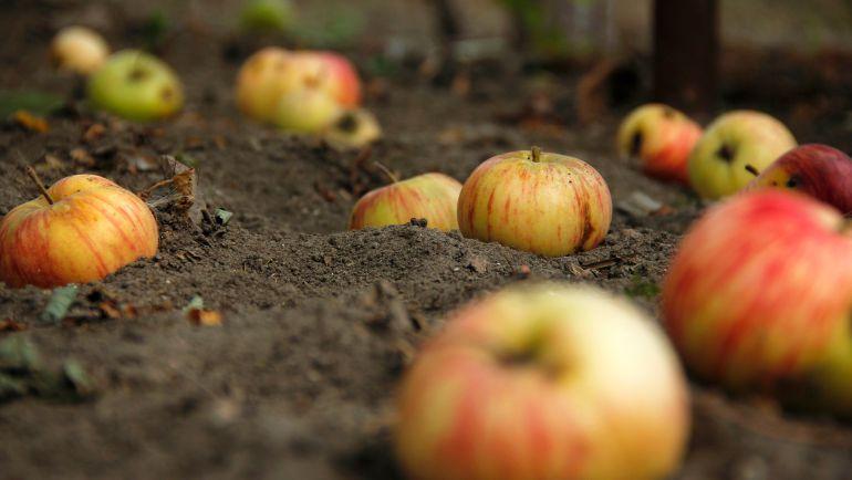 La agricultura ecológica experimenta un importante crecimiento en los últimos años
