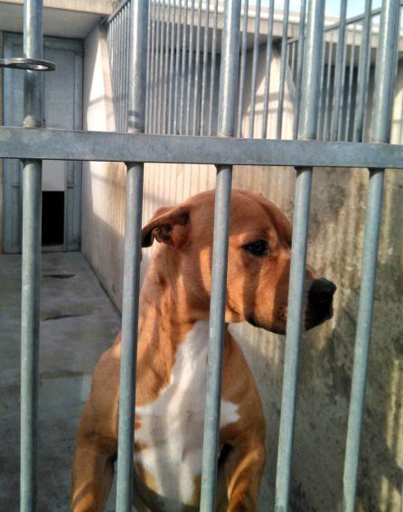 Uno de los perros que espera ser adoptado
