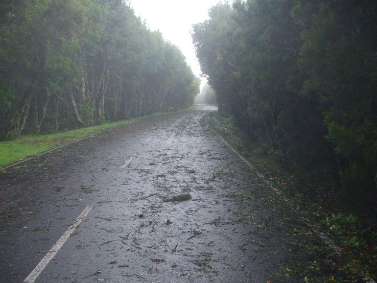 Canarias, en riesgo por vientos de hasta 100 km/h