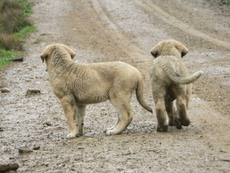 Recogida animales abandonados sevilla