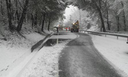 Els bombers treballant per treure l'arbre que talla la via, en aquest punt de la C-12 a Cellers, al municipi de Castell de Mur. Foto cedida a RÀDIO LLEIDA