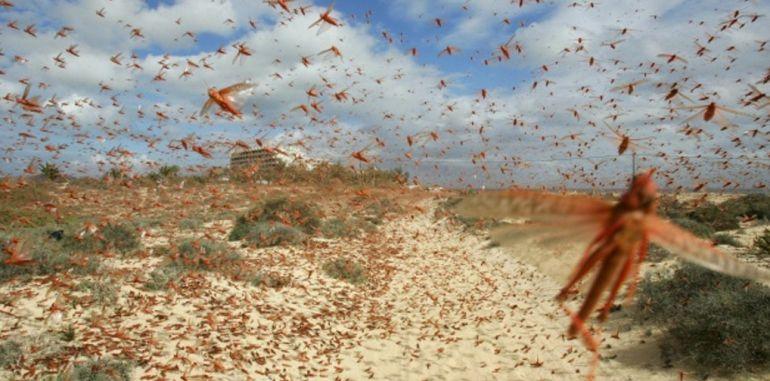 Las plagas de langosta aún siguen produciéndose en distintos lugares del mundo con efectos devastadores. En la imagen, plaga de langosta sobre Corralejo, en Fuerteventura, en la primavera de 2016.