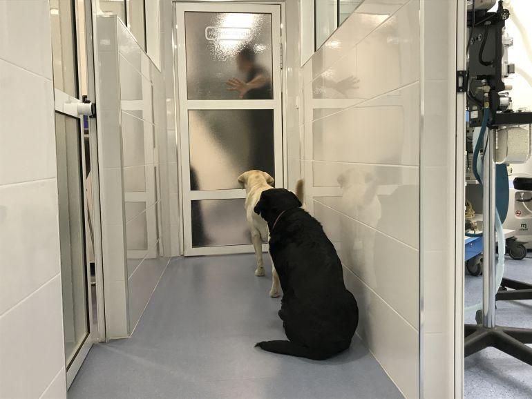 Bienvivir: La diferencia de un hospital veterinario