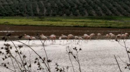 Flamencos en Andújar