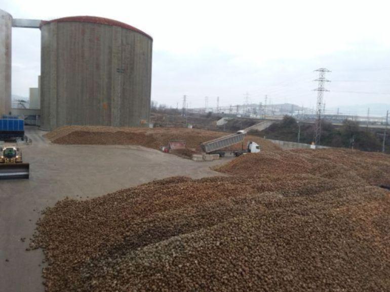 Ucogal se llevará 50.000 toneladas de remolacha leonesa a Olmedo