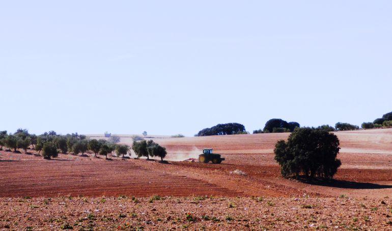 """Morcillo: """"Estas precipitaciones alivian a los agricultores de secano, pero tiene que seguir lloviendo"""""""