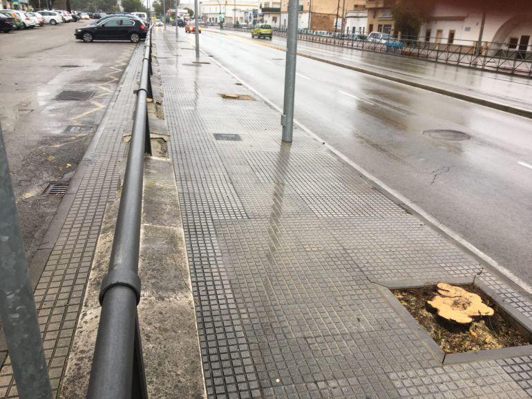 Árbol talado en una avenida de Jerez