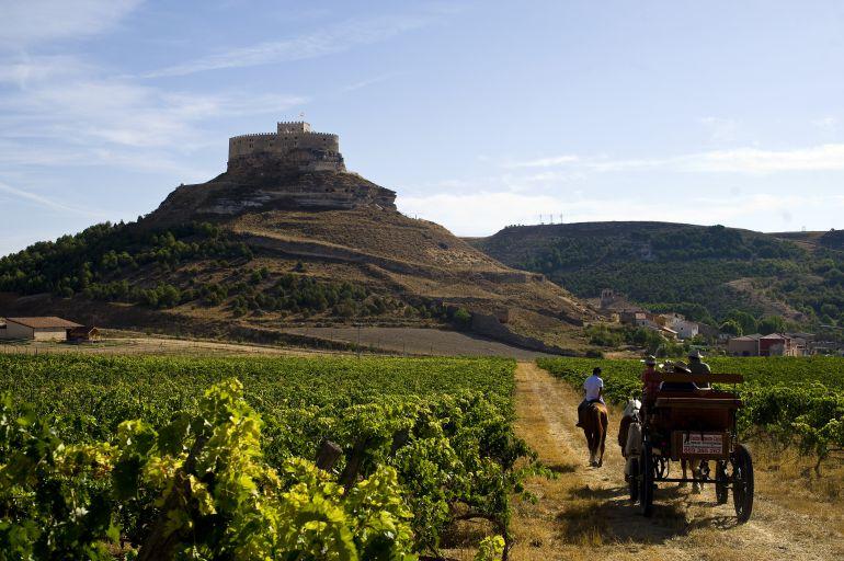 Paseo entre viñedos en Curiel de Duero