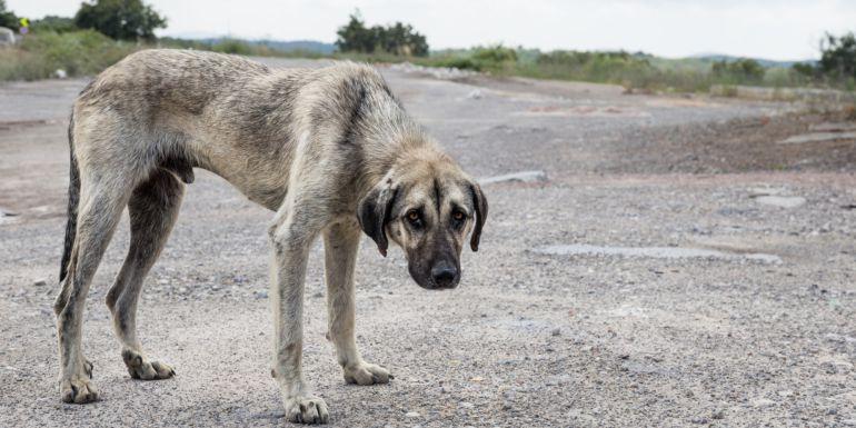 La Guardia Civil investiga a un vecino de Montederramo por un supuesto delito de maltrato y abandono de animales.