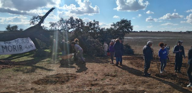 Los vecinos se movilizaron para salvar el árbol.