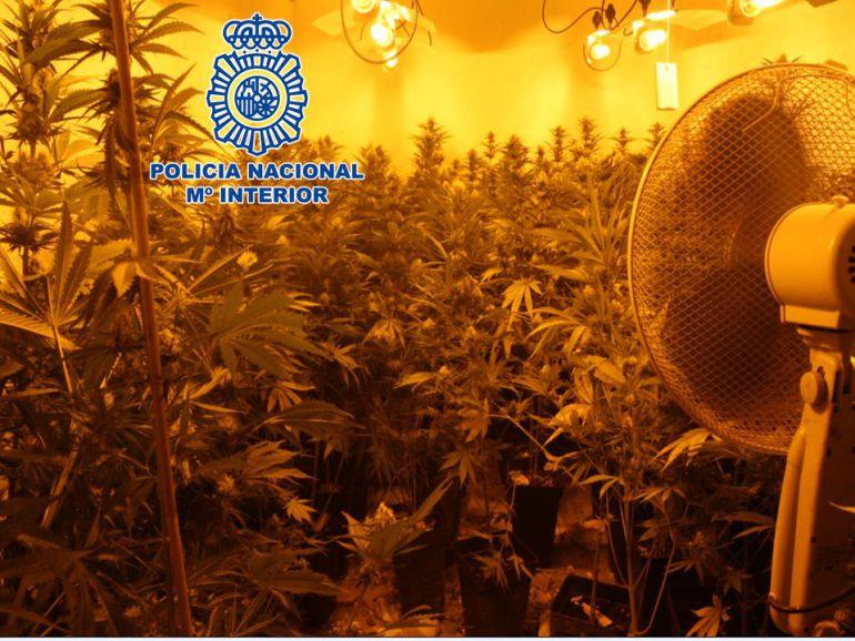 Imagen de archivo de un cultivo interior de marihuana en Granada