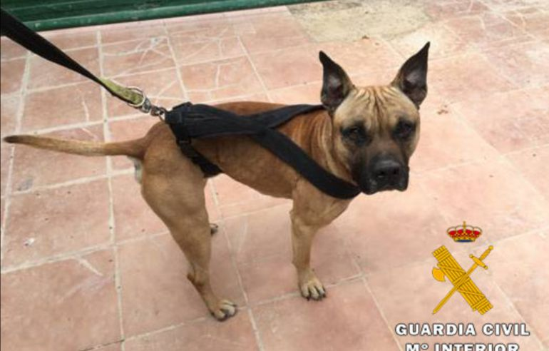 Dos detenidos por robar tres perros pitbull de protectora animales en Albacete