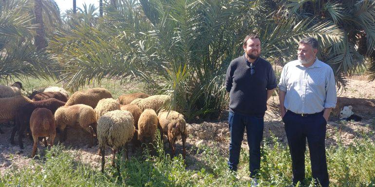 El concejal de Medio Ambiente con las ovejas guirra