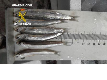 Intervenidos más de 100 kg de pescado inmaduro en Guarromán