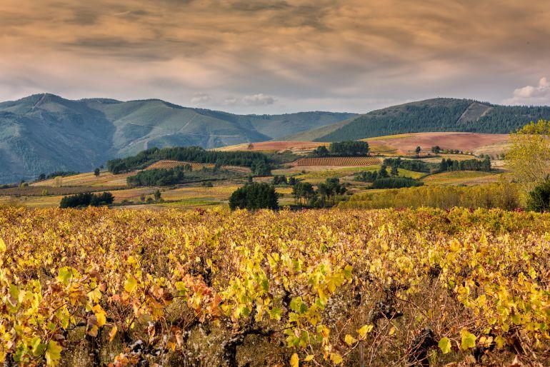 Viñas bercianas