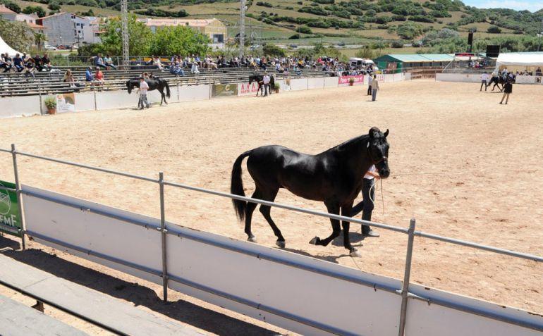 La Fira del Cavall se podrá disfrutar de viernes a domingo.