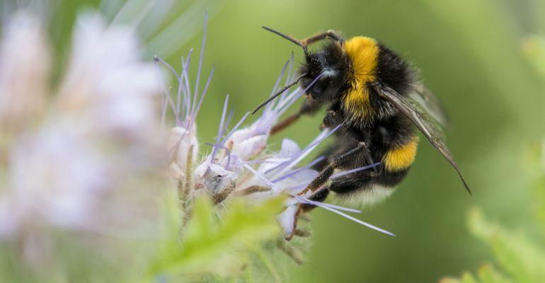 El objetivo de la campaña es concienciar a la infancia sobre la protección de las abejas