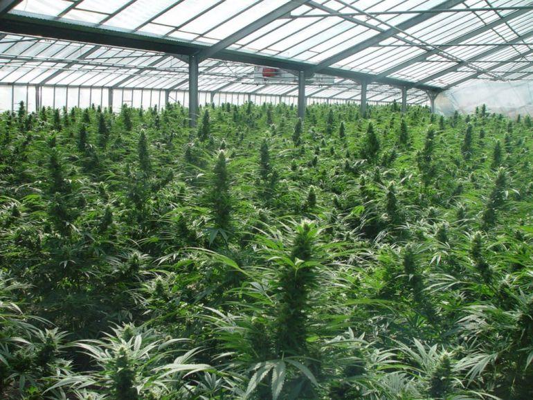 Les detienen con una plantación con 14 kilos de cannabis pero les condenan por defraudar a Iberdrola
