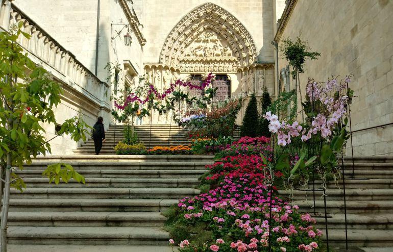 Fiesta de las Flores: Armonía visual y musical