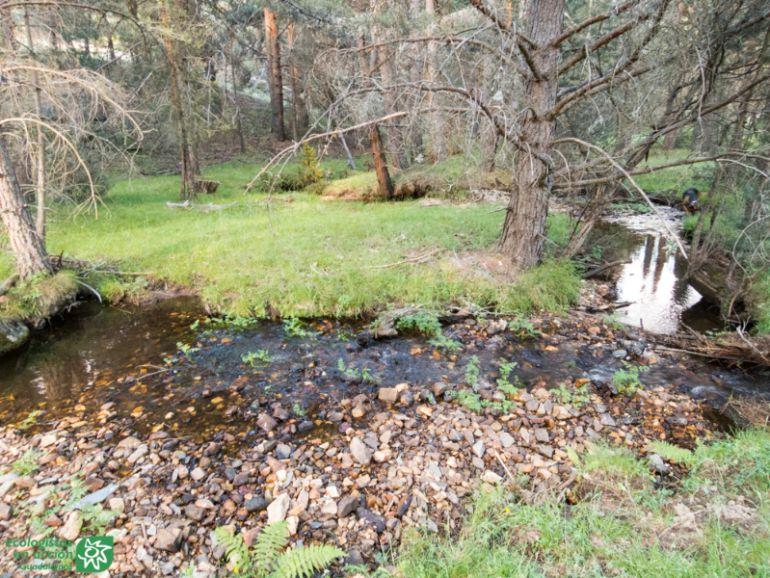 El río Pelagallinas y otras Reservas Naturales Fluviales de Guadalajara: El río Pelagallinas y las Reservas Naturales Fluviales