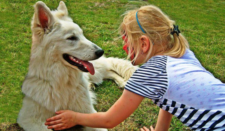 Los perros de asistencia consiguen mejorar la calidad de vida de sus usuarios