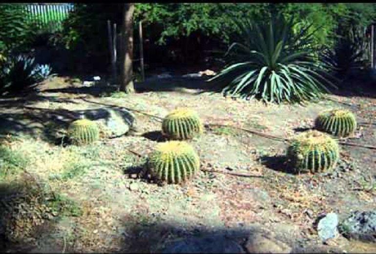 El jard n americano reabre al p blico radio sevilla for Jardin americano sevilla