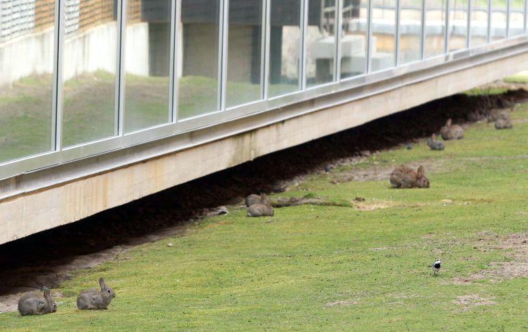 El número de conejos capturados en un año supera los 12.400 en la capital y las palomas llega a 5.200