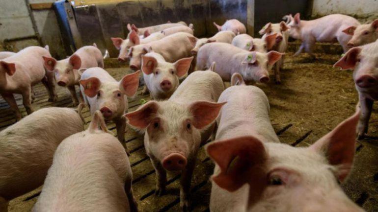 Ecologistas en Acción denuncia los perjuicios medioambientales de la macrogranja ubicada en Roperuelos del Páramo, con más de 3.000 cerdos