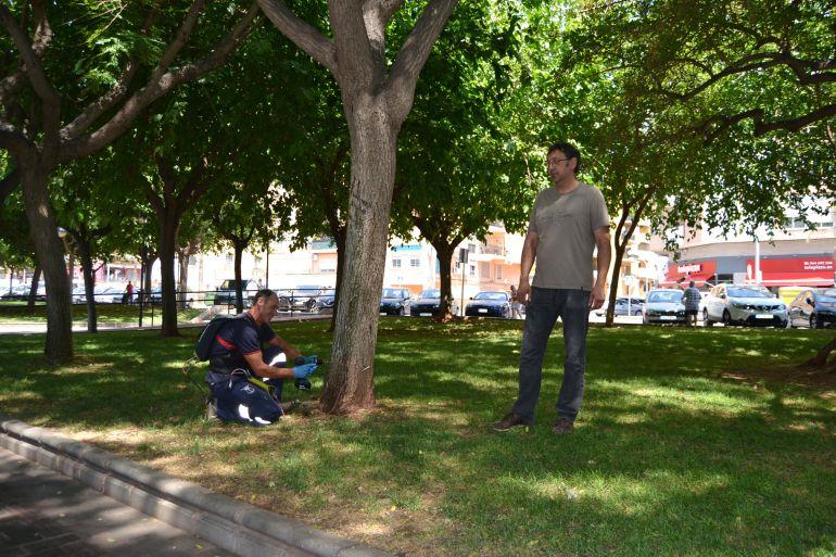 La Vall d'Uixó: Técnica de endoterapia para el tratamiento de plagas en árboles