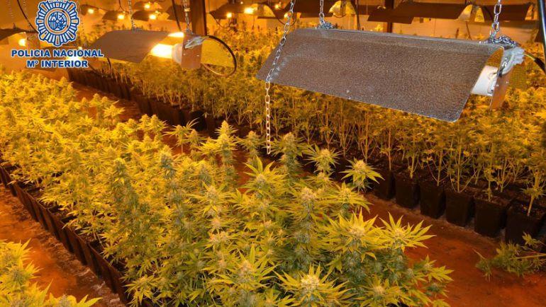Una de las plantaciones de marihuana desarticuladas por la Policía Nacional en El Puche.