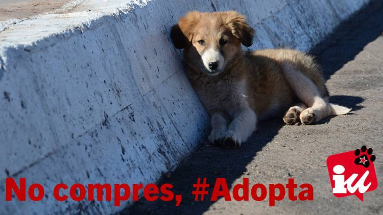 IU Alcobendas propone crear un centro de acogida de animales que garantice el 'sacrificio cero'