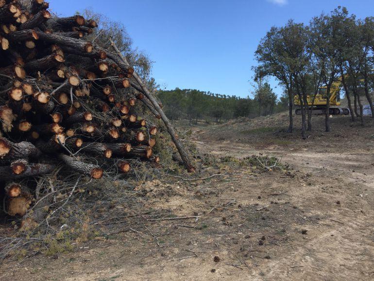 Habrá otros 350 empleos en la gestión forestal