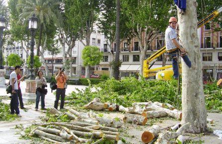Debate en Radio Sevilla sobre la tala de árboles en la ciudad