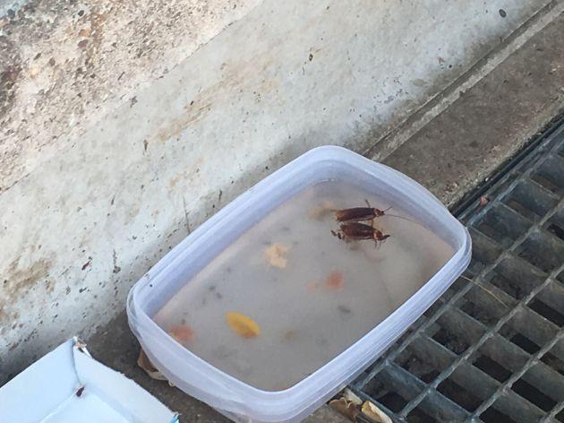 Cucarachas muertas en el agua que beben los gatos de la colonia del Vial