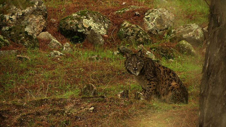 Crítica del documental Wildmed sobre la fauna y la flora de Sierra Morena: Wildmed o la concienzación