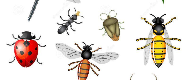 Related keywords suggestions for los insectos - Como ahuyentar los mosquitos ...
