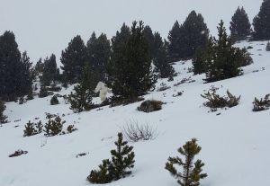 Fotografía supuestamente captada por unos esquiadores en el que se ve el supuesto yeti