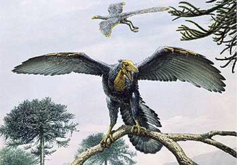 El ave m 225 s grande y antigua del mundo estaba en la ant 225 rtida hora