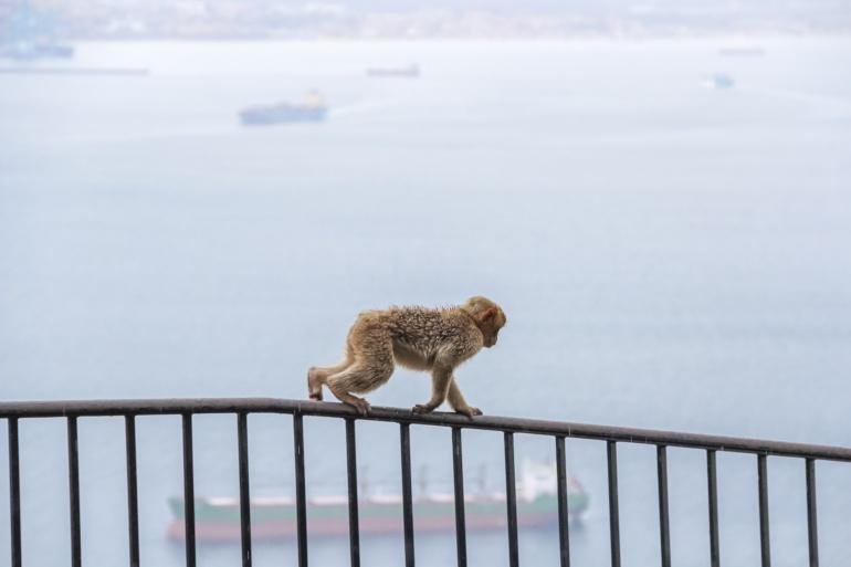 Un mono se columpia sobre una barandilla
