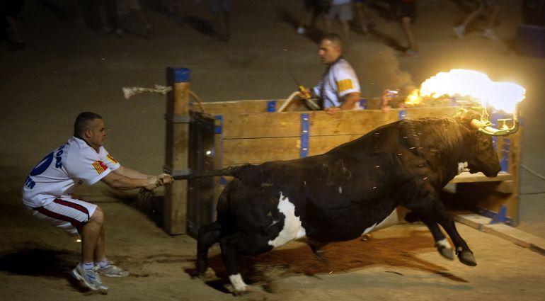 Imagen del toro embolao, festejo que se realiza en Amposta, Tarragona.