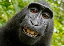La ciencia reconoce a los monos como seres sintiéntes