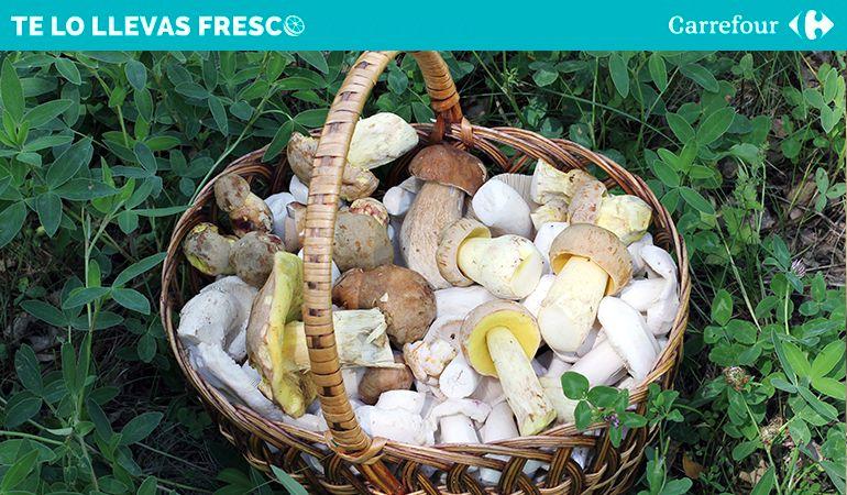 Las setas son uno de los mayores regalos gastronómicos del otoño