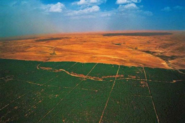 Catorce países africanos están plantanado millones de árboles para crear una enorme barrera verde alrededor del desierto del Sahara y poder frenar el impacto del cambio climático.