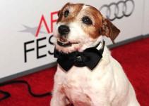 Reivindican unos premios Oscar para los animales que salen en las películas