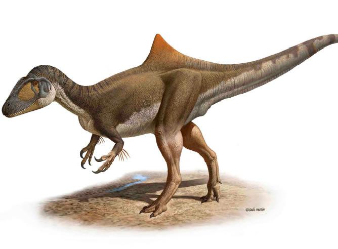 """Se llama """"Concavenator corcovatus"""", vivió hace unos 125 millones de años en la Península Ibérica, medía 6 metros y es el primer dinosaurio que se ha encontrado que tenía joroba"""