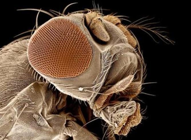 Científicos estudian el ciclo vital de moscas para resolver crímenes