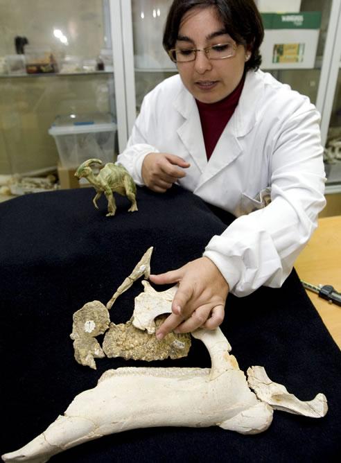 Penélope Cruzado, paleontóloga del grupo de investigación Aragosaurus-IUCA de la Universidad de Zaragoza muestra los fósiles de la cabeza de un dinosario que científicos de Zaragoza, Asturias y el País Vasco han descubierto en la localidad de Arén (Huesca).