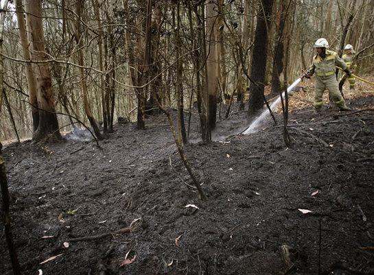 FOTOGALERIA: Una brigada de los servicios de extinción de incendios refresca el perímetro del incendio que asoló el parque nacional