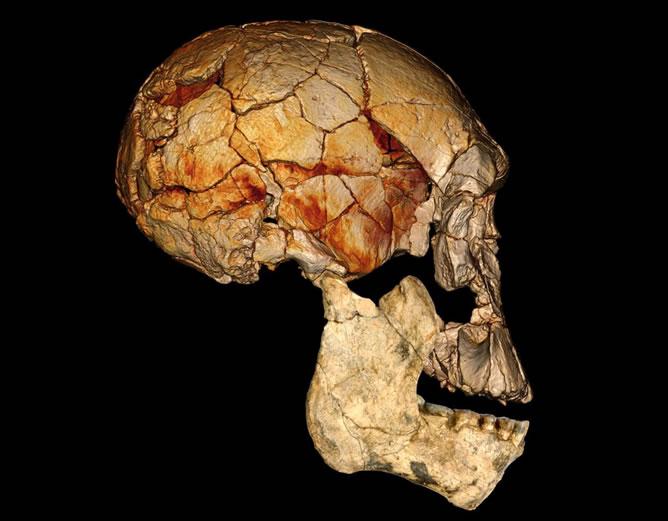 Foto cedida por 'Nature' en la que se ve el cráneo de un homínido primitivo, descubierto en Kenia en 1972