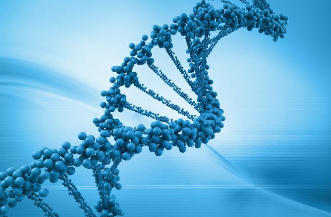 Descubre un gen llamado 'Períod 1'  que puede revelar la hora de la muerte